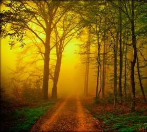 Chemin dans le bois